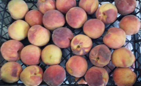 peach wholesale