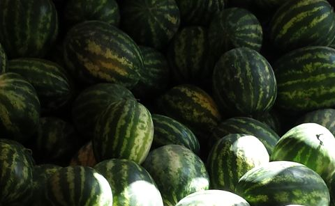 watermelon wholesale