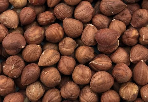 hazelnut natural wholesale