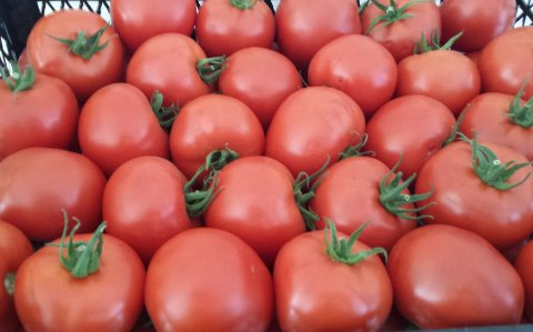 tomatoes wholesale